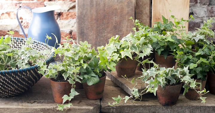 Planten Slaapkamer Baby : Pagina 14 u2013 hoveniersbedrijf dirk meesters
